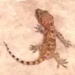 "Link to ""A Haunting"" essay and image of a gecko"