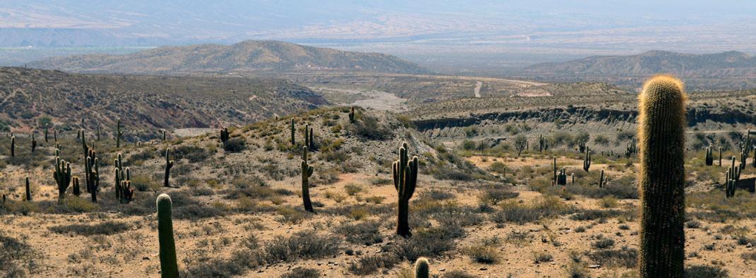 Sonora Desert hills with cactuses Tucson Arizona