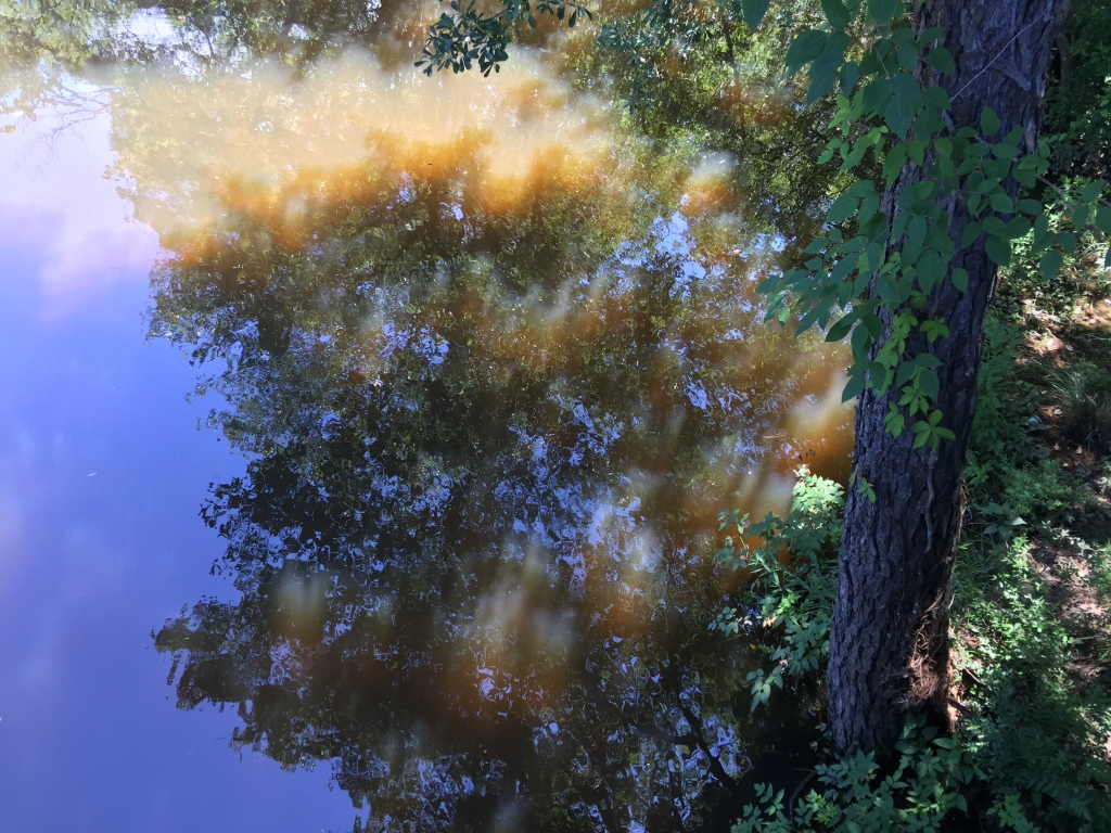 Trees, sky, light on water in Daphne, Alabama