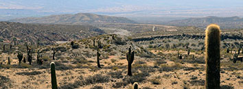 Sonora Desert hills with cactuses Tucson Arizona