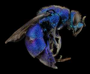 Photo by PIxabay on Pexels.com of a curled dark wasp against a black background