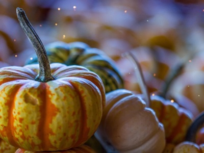 Pile of small pumpkins with one pumpkin with a long stem in focus in the foreground